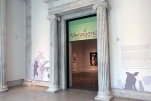 Albright-Knox: Menagerie Exhibition